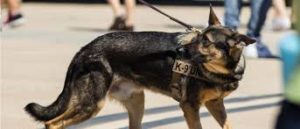 Police Dog worried about his job