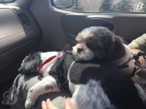 Tired puppies!