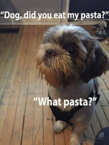 Dog with pasta sauce on her face