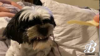 Peaty Always Smiles When He Eats Chips